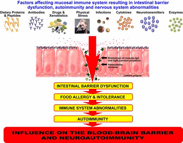 mucosal_barrier_degradation2